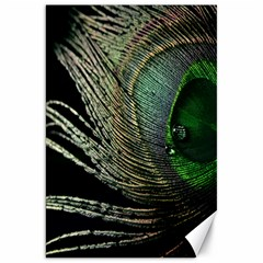 Feather Peacock Drops Green Canvas 20  X 30