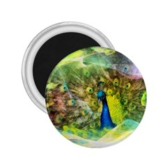 Peacock Digital Painting 2.25  Magnets