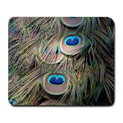 Colorful Peacock Feathers Background Large Mousepads