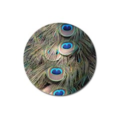 Colorful Peacock Feathers Background Magnet 3  (Round)