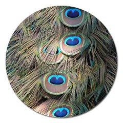 Colorful Peacock Feathers Background Magnet 5  (Round)