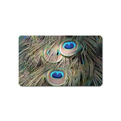 Colorful Peacock Feathers Background Magnet (Name Card)