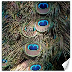 Colorful Peacock Feathers Background Canvas 16  x 16