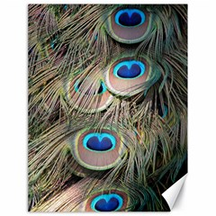Colorful Peacock Feathers Background Canvas 18  X 24