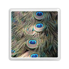 Colorful Peacock Feathers Background Memory Card Reader (square)