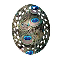 Colorful Peacock Feathers Background Ornament (Oval Filigree)