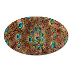 Peacock Pattern Background Oval Magnet