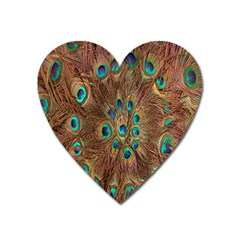 Peacock Pattern Background Heart Magnet