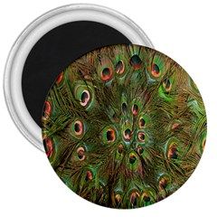 Peacock Feathers Green Background 3  Magnets