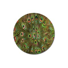 Peacock Feathers Green Background Magnet 3  (round)