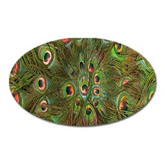 Peacock Feathers Green Background Oval Magnet