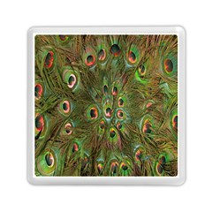 Peacock Feathers Green Background Memory Card Reader (square)