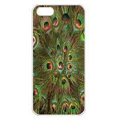Peacock Feathers Green Background Apple iPhone 5 Seamless Case (White)