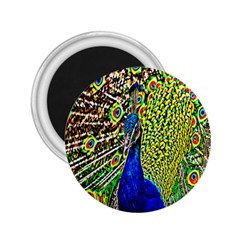 Graphic Painting Of A Peacock 2.25  Magnets