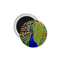 Graphic Painting Of A Peacock 1 75  Magnets