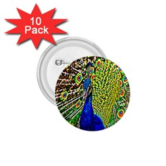 Graphic Painting Of A Peacock 1.75  Buttons (10 pack)
