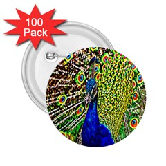 Graphic Painting Of A Peacock 2 25  Buttons (100 Pack)
