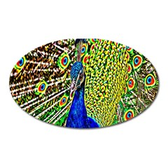Graphic Painting Of A Peacock Oval Magnet