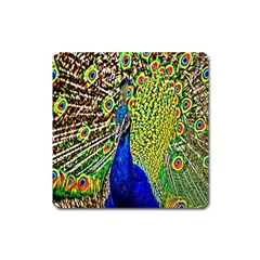 Graphic Painting Of A Peacock Square Magnet