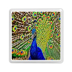 Graphic Painting Of A Peacock Memory Card Reader (Square)