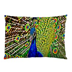 Graphic Painting Of A Peacock Pillow Case (Two Sides)