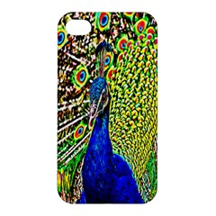 Graphic Painting Of A Peacock Apple iPhone 4/4S Hardshell Case