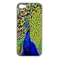 Graphic Painting Of A Peacock Apple iPhone 5 Case (Silver)