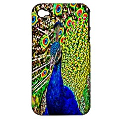 Graphic Painting Of A Peacock Apple iPhone 4/4S Hardshell Case (PC+Silicone)