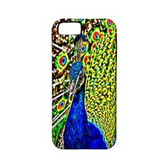 Graphic Painting Of A Peacock Apple iPhone 5 Classic Hardshell Case (PC+Silicone)