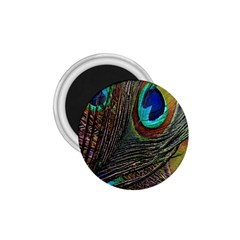 Peacock Feathers 1 75  Magnets