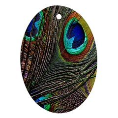 Peacock Feathers Ornament (Oval)