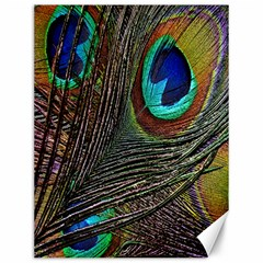Peacock Feathers Canvas 12  x 16