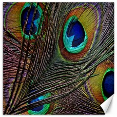Peacock Feathers Canvas 16  X 16
