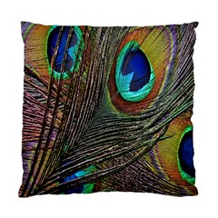 Peacock Feathers Standard Cushion Case (Two Sides)