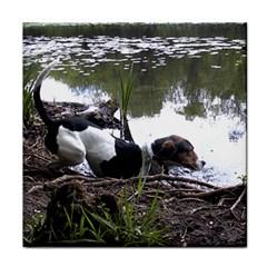 Treeing Walker Coonhound In Water Tile Coasters