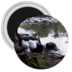Treeing Walker Coonhound In Water 3  Magnets