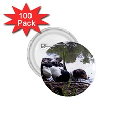 Treeing Walker Coonhound In Water 1.75  Buttons (100 pack)