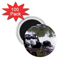 Treeing Walker Coonhound In Water 1.75  Magnets (100 pack)