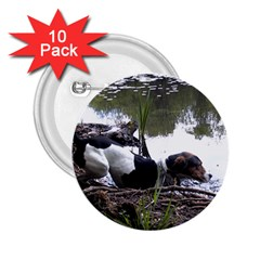 Treeing Walker Coonhound In Water 2.25  Buttons (10 pack)