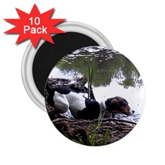 Treeing Walker Coonhound In Water 2.25  Magnets (10 pack)