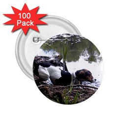 Treeing Walker Coonhound In Water 2.25  Buttons (100 pack)