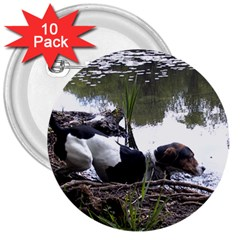Treeing Walker Coonhound In Water 3  Buttons (10 pack)