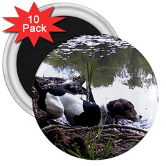 Treeing Walker Coonhound In Water 3  Magnets (10 pack)