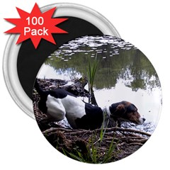 Treeing Walker Coonhound In Water 3  Magnets (100 pack)