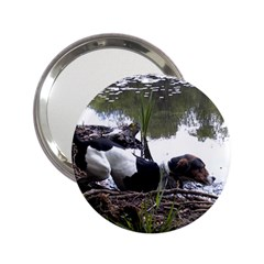 Treeing Walker Coonhound In Water 2.25  Handbag Mirrors