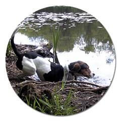 Treeing Walker Coonhound In Water Magnet 5  (Round)