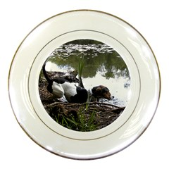 Treeing Walker Coonhound In Water Porcelain Plates