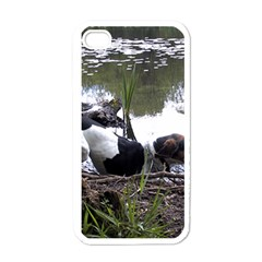 Treeing Walker Coonhound In Water Apple iPhone 4 Case (White)