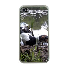 Treeing Walker Coonhound In Water Apple iPhone 4 Case (Clear)