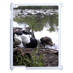 Treeing Walker Coonhound In Water Apple iPad 2 Case (White)